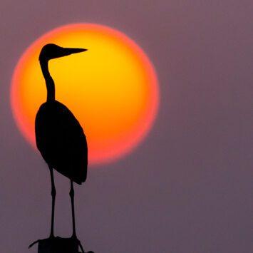 Wildlife – Birdwatching – Camping 2021